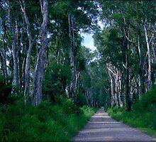 Paperbark Lane by myraj