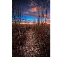 Beaten Path Photographic Print