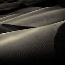Dunes in evening light by   Paul W. Faust