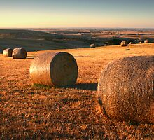 Golden Plain - Barrabool Hills by Hans Kawitzki