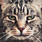No Nonsense Tabby Face by Jane Underwood
