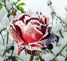 Jack Frost by Morag Bates