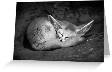 Fennec Fox by SD Smart