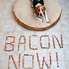 Bacon Now! by Darren Boucher