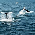 Whale Watching at Cape Cod by Bine