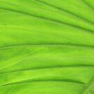 Huge Green Leaf by Marcia Rubin
