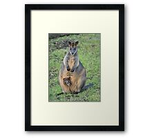 Mrs Swamp Wallaby and her baby Framed Print