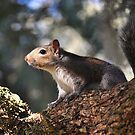 Squirrel In The Old Oak Tree by Kathy Baccari