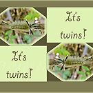 It&#x27;s Twins Birth Announcement - Banded Tussock Moth Caterpillar by MotherNature