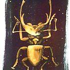 Stag beetle by Kardi Somerfield