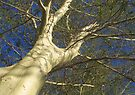 Fever tree by Elizabeth Kendall