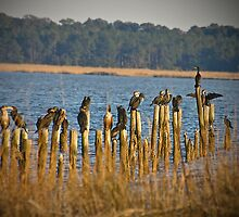 THE HANG OUT Cormorants by imagetj