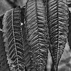 Leaves by Al Duke
