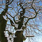 snow on a tree in the sun by MaaikeDesign