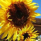 Bright Yellow Sunflower by runninragged