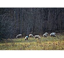 Blue Behinds Photographic Print