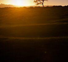Flare by Jon Bradbury