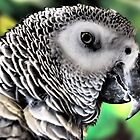 Feathered Friend by Rebecca Reist