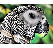 Feathered Friend Photographic Print