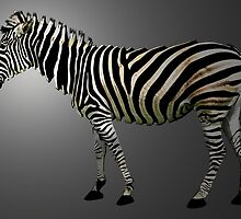a slice of zebra by tinncity