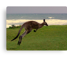 Skippy on the move Canvas Print