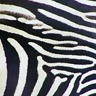 Zebra by wahboasti