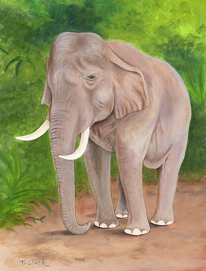 Asian Elephant (Elephas maximus) by Tamara Clark
