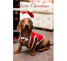 Merry Christmas Sausage Dog Photographic Print