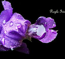 Purple Rain by Lori D Myers