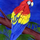 Scarlet Red Macaw (Ara macao) by Tamara Clark