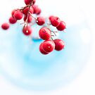 red berries by Ingz