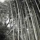 Hakone Bamboo 1 by Ellen Cotton