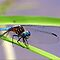 Winged Insects - April Avatar