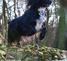 Low Flying Dog by Mark Cooper