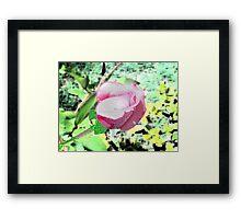 Redone Rose Framed Print