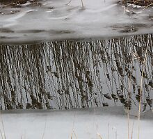Marsh Grass Reflections with Ice 1 by marybedy