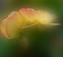 Beckoning Begonia by enchantedImages