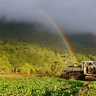 rainbow harvest by michelle mcclintock