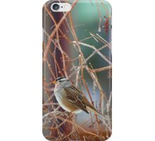White Crowned Sparrow On A Winter Day iPhone Case/Skin