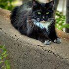&quot; Street Kitty&quot; by Diana Graves Photography
