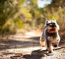 runnin' dog by aurelie k