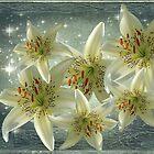 Stargazer Lily  by NewfieKeith