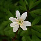 White Flower by Lennox George