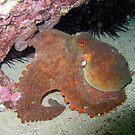 Octopus by springs