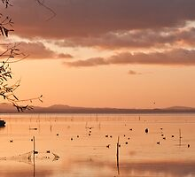 Trasimeno lake by Mattia  Bicchi Photography