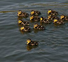 12 Ducklings by Gary Rayner