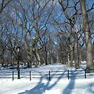 Central Park in Snow by lenspiro