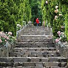Stairs at Maroondah Dam by Charles Kosina