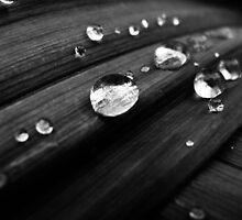 Classy Drops by lindsshinn