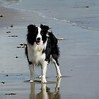 OLLIE'S DAY AT THE BEACH........! by Roy  Massicks